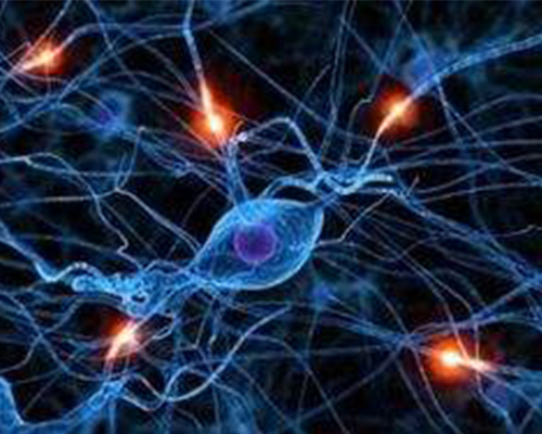 ◆ research and development of new central nervous system drugs
